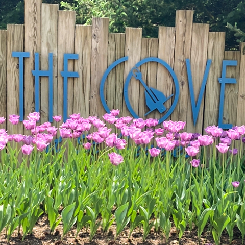 The Cove Property 2